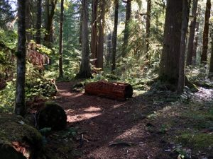 The hiker's redwood cedar Meditation Log